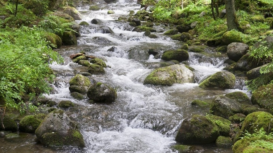 3 juli: Vitaliteit – Meegaan met de stroom