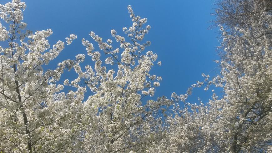 12 maart: 'Een nieuw begin: Lentelicht'